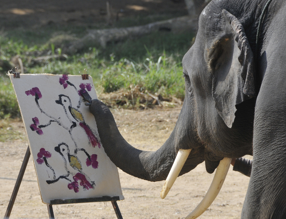 Elephant Painting, Maetang Elephant Camp, Northern Thailand (...)