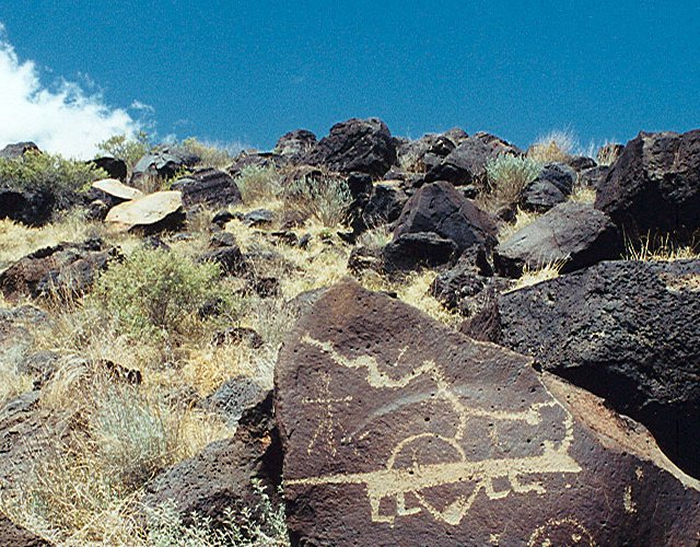 Mountain Lion, Petroglyph National Park, Albuquerque, New Mexico