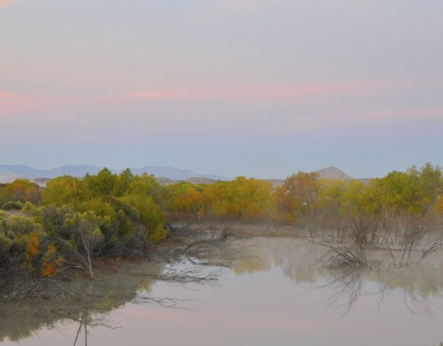 Bosque del Apache, Mist Rising Off Marsh at Dawn