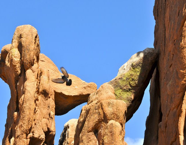 Pigeon, Garden of the Gods, Colorado